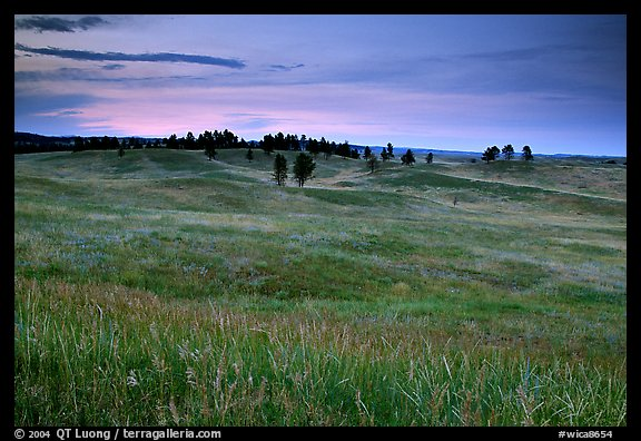 Rolling hills covered with grasses and scattered pines, dusk. Wind Cave National Park (color)