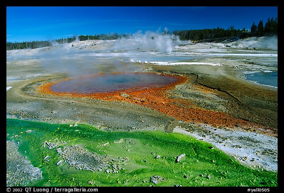Green and red algaes in Norris geyser basin. Yellowstone National Park (color)