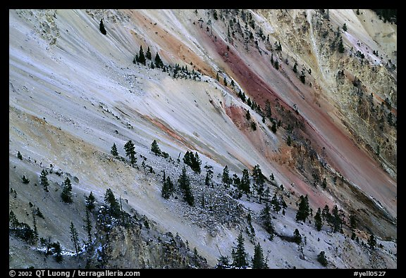 Trees and colorful mineral deposits, Grand Canyon of Yellowstone. Yellowstone National Park (color)