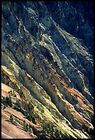 Canyon slopes, Grand Canyon of Yellowstone. Yellowstone National Park ( color)
