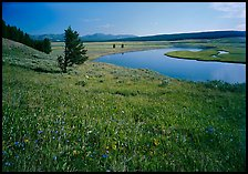 Meadow and bend of the Yellowstone River, Hayden Valley. Yellowstone National Park, Wyoming, USA.