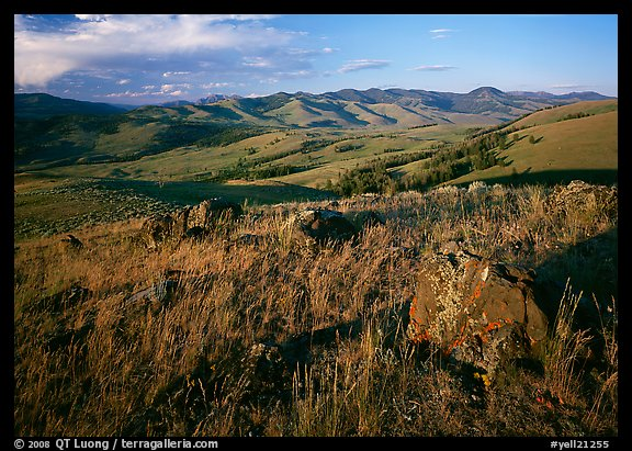 Rocks and grasses on Specimen ridge, late afternoon. Yellowstone National Park (color)
