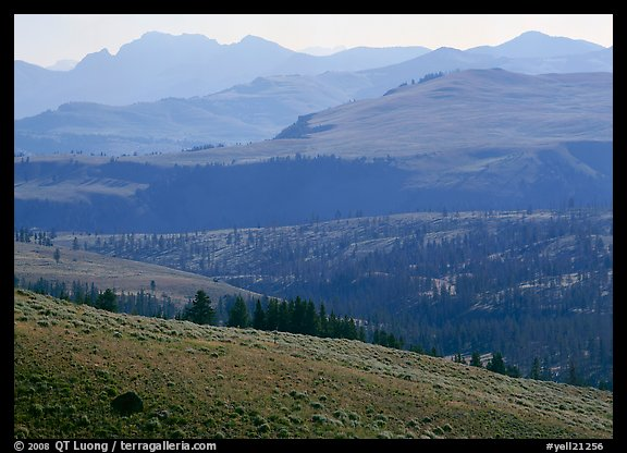 Absaroka Range from Dunraven Pass, early morning. Yellowstone National Park (color)