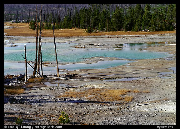 Dead trees and turquoise pond in Norris Geyser Basin. Yellowstone National Park (color)