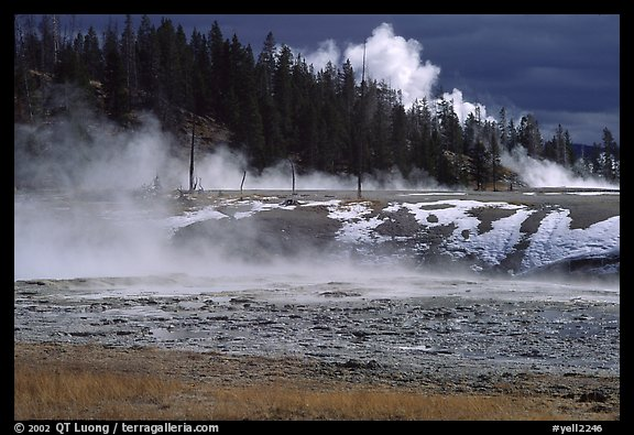 Fumeroles and forest in Upper Geyser Basin. Yellowstone National Park (color)