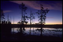 Trees near Fountain Paint Pot at sunset. Yellowstone National Park, Wyoming, USA. (color)