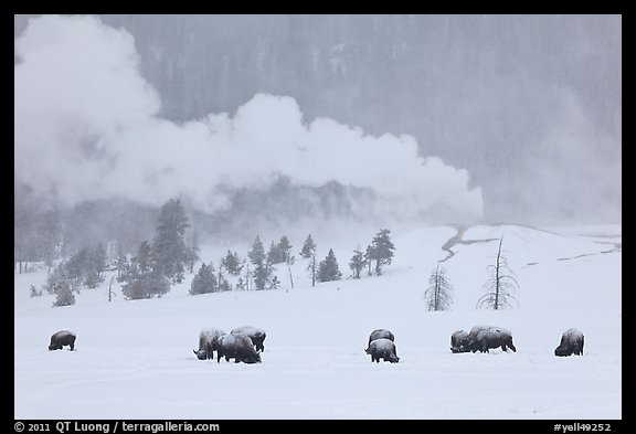 Yellowstone National Park Pictures Us National Parks Stock