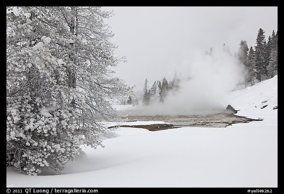 Snowy landscape with distant thermal pool. Yellowstone National Park (color)