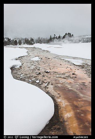 Thermal run-off stream contrasts with snowy landscape. Yellowstone National Park (color)