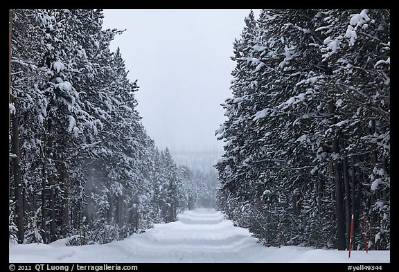 Snow-covered road. Yellowstone National Park, Wyoming, USA.