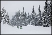 Snowmobiling on snowy day. Yellowstone National Park, Wyoming, USA.