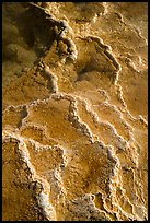 Detail of travertine terraces, Mammoth Hot Springs. Yellowstone National Park ( color)