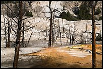 Angel Terrace, Mammoth Hot Springs. Yellowstone National Park ( color)