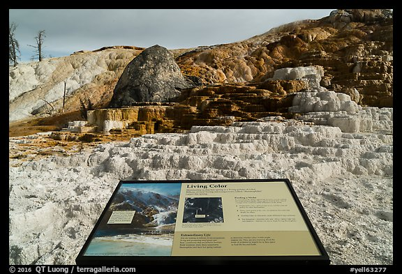 Living Color interpretive sign, Mammoth Hot Springs. Yellowstone National Park (color)