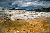 Travertine terraces and dead trees, Main Terrace, afternoon. Yellowstone National Park ( color)