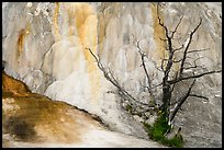 Dead tree, Orange Spring Mound, Mammoth Hot Springs. Yellowstone National Park ( color)