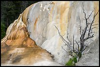 Orange Spring Mound with tree skeleton, Mammoth Hot Springs. Yellowstone National Park ( color)