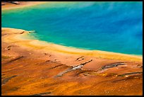 Rainbow colors of Grand Prismatic Spring. Yellowstone National Park ( color)