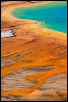 Vivid colors of microbial mats around Grand Prismatic Spring. Yellowstone National Park ( color)