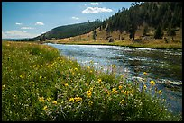 Summer Wildflowers and Firehole River. Yellowstone National Park ( color)