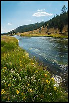 Wildflowers along Firehole River. Yellowstone National Park ( color)