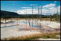 Black Sand Basin with trees killed by hot springs. Yellowstone National Park ( color)