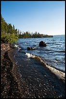 Lewis Lake Shore with black send. Yellowstone National Park ( color)