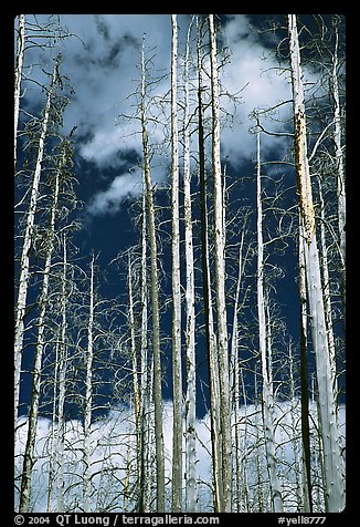 Burned forest and clouds. Yellowstone National Park (color)