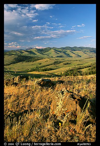 Rocks, grasses, and hills, Specimen ridge, late afternoon. Yellowstone National Park (color)