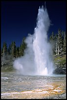 Grand Geyser,  tallest of the regularly erupting geysers in the Park. Yellowstone National Park, Wyoming, USA.