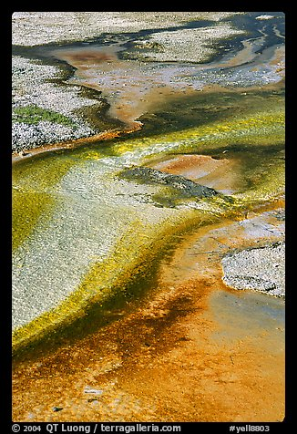 Detail of colorful algaes, Biscuit Basin. Yellowstone National Park, Wyoming, USA.