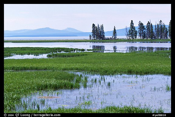 Grasses and Yellowstone Lake near Stemboat Point, morning. Yellowstone National Park (color)