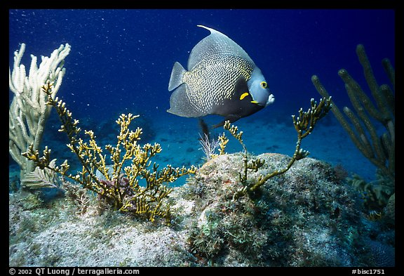 Tropical Fish. Biscayne National Park (color)