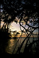 Biscayne Bay viewed through mangal at edge of water, sunset. Biscayne National Park, Florida, USA.