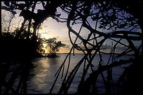 Biscayne Bay viewed through dense mangrove forest, sunset. Biscayne National Park, Florida, USA.