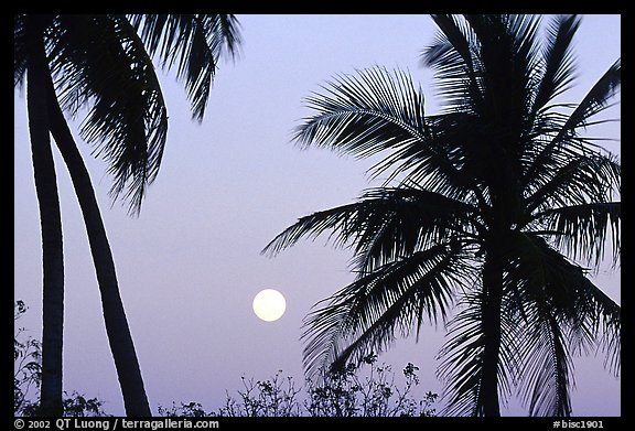 Palm trees and moon, Convoy Point. Biscayne National Park (color)