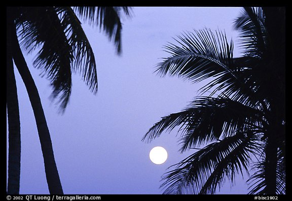 Palm trees leaves and moon, Convoy Point. Biscayne National Park (color)