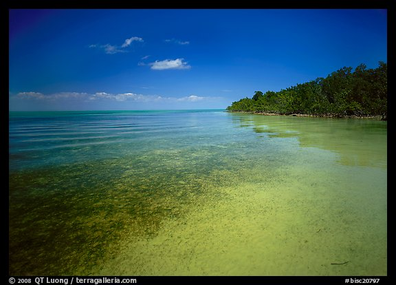 Shoreline and seagrass on Elliott Key near the harbor. Biscayne National Park (color)