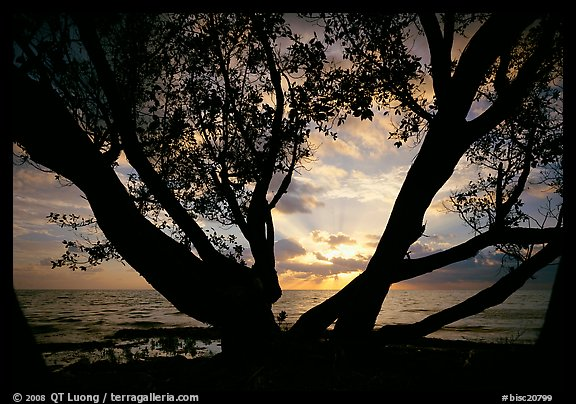 Sunrise framed by tree, Elliott Key. Biscayne National Park (color)