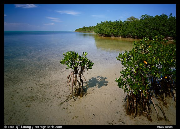 Depositional coastal environment with mangrove on Elliott Key, afternoon. Biscayne National Park (color)