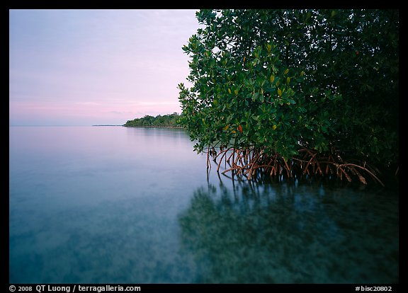 Coastal wetland community of mangroves at dusk, Elliott Key. Biscayne National Park (color)
