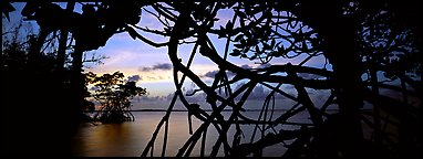 View over Florida Bay through mangrove branches at sunset. Biscayne National Park (Panoramic color)