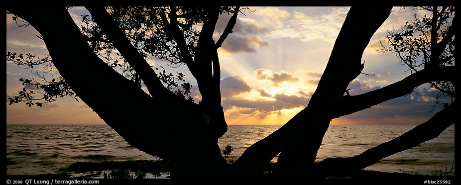 Ocean sunrise seen through branches of tree. Biscayne National Park (color)