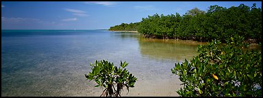 Eliott Key shoreline with mangroves. Biscayne National Park (Panoramic color)