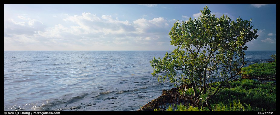 Tree on Atlantic Ocean shore. Biscayne National Park (color)