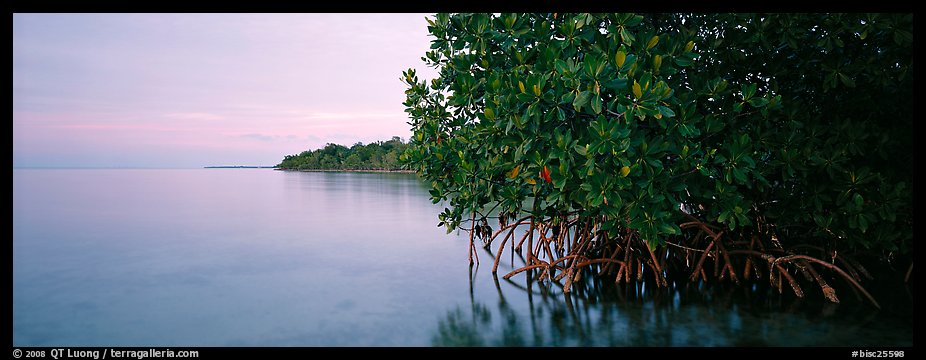 Florida Bay shore at dusk. Biscayne National Park (color)