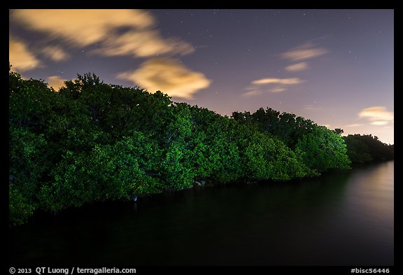 Row of mangroves trees at night, Convoy Point. Biscayne National Park (color)