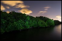 Row of mangroves trees at night, Convoy Point. Biscayne National Park ( color)