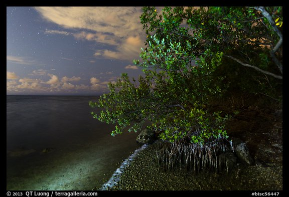 Mangroves and Biscayne Bay at night, Convoy Point. Biscayne National Park (color)