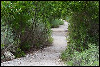 Trail, Convoy Point. Biscayne National Park, Florida, USA. (color)